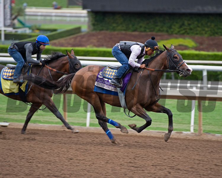 Enchanting Lady<br /> Works at Santa Anita in preparation for 2016 Breeders' Cup on Oct. 30, 2016, in Arcadia, CA.