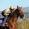 Caption:  Danette<br /> Scenes at Santa Anita  on Oct. 27, 2014, in preparation for Breeders' Cup  in California.<br /> 1Origs10_28_14 image408<br /> Photo by Anne M. Eberhardt