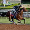Caption:  Secret Circle<br /> Scenes at Santa Anita in preparation for Breeders' Cup  in California on Oct. 27, 2014.<br /> 1Origs10_27_14 image698<br /> Photo by Anne M. Eberhardt
