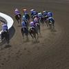 The horses rounded the final turn in the Breeders' Cup Filly & Mare Sprint (G. I). Photo by Crawford Ifland.