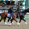 Caption:  Rum Point<br /> Breeders' Cup horses and connections at Santa Anita near Acadia, California, preparing for Breeders' Cup raceways on Nov. 1 and Nov. 2, 2013.<br /> BCWorks01Jpegs_10_28_13 image312<br /> Photo by Anne M. Eberhardt