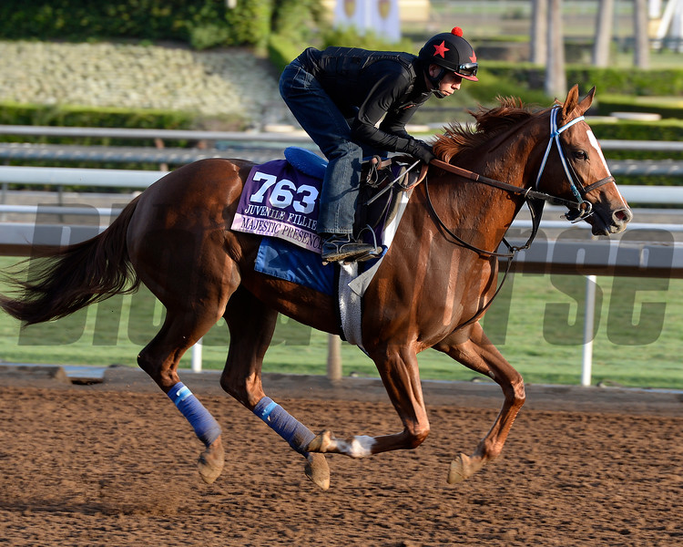 Caption:  Majestic Presence<br /> Scenes at Santa Anita in preparation for Breeders' Cup  in California on Oct. 27, 2014.<br /> 1Origs10_27_14 image793<br /> Photo by Anne M. Eberhardt