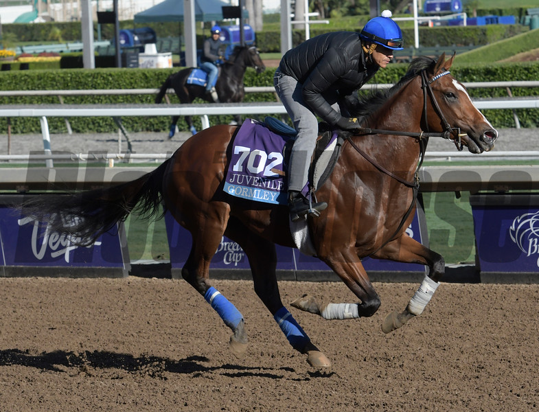 Gormley gallops at Santa Anita Nov. 2, 2016 in preparation for his appearance in the Breeders' Cup in Arcadia, California.  Photo by Skip Dickstein
