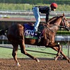 Caption:  Tom's Tribute<br /> Scenes at Santa Anita  on Oct. 27, 2014, in preparation for Breeders' Cup  in California.<br /> 1Origs10_28_14 image405<br /> Photo by Anne M. Eberhardt