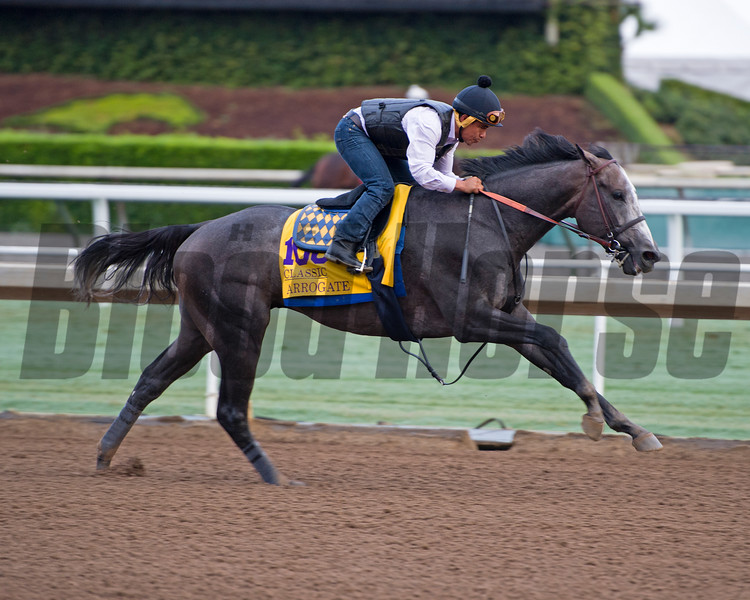 Arrogate<br /> Works at Santa Anita in preparation for 2016 Breeders' Cup on Oct. 31, 2016, in Arcadia, CA.