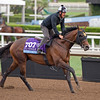 Star Empire<br /> Works at Santa Anita in preparation for 2016 Breeders' Cup on Nov. 1, 2016, in Arcadia, CA.
