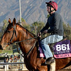 Caption:  Qualify<br /> Scenes at Santa Anita  on Oct. 30, 2014, in preparation for Breeders' Cup  in California.<br /> 1Origs10_30_14 image016<br /> Photo by Anne M. Eberhardt