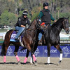 Caption:  Home School<br /> Breeders' Cup horses and connections at Santa Anita near Acadia, California, preparing for Breeders' Cup raceways on Nov. 1 and Nov. 2, 2013.<br /> BCWorks3Jpegs_10_31_13 image053<br /> Photo by Anne M. Eberhardt