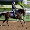 Caption:  Danette<br /> Scenes at Santa Anita in preparation for Breeders' Cup  in California on Oct. 27, 2014.<br /> 1Origs10_27_14 image972<br /> Photo by Anne M. Eberhardt