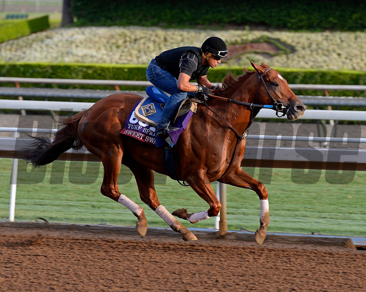 Sweet Swap on Oct. 26, 2014, at Santa Anita in preparation for the Breeders' Cup.<br /> Anne M. Eberhardt photo