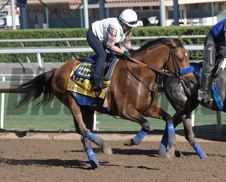 Hoppertunity gallops at Santa Anita Nov. 2, 2016 in preparation for his appearance in the Breeders' Cup in Arcadia, California.  Photo by Skip Dickstein