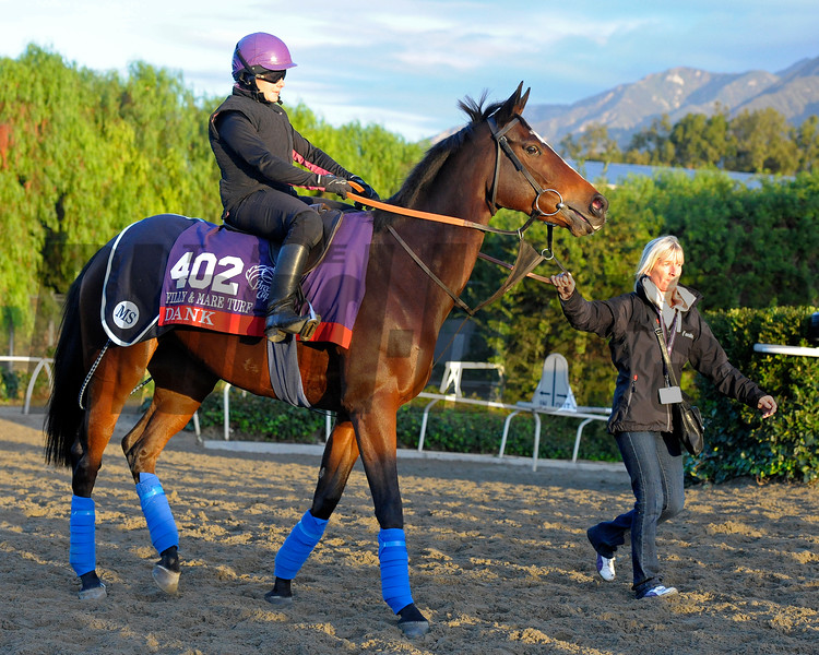 Caption:  Dank<br /> Breeders' Cup horses and connections at Santa Anita near Acadia, California, preparing for Breeders' Cup raceways on Nov. 1 and Nov. 2, 2013.<br /> BCWorks1Jpegs_10_29_13 image418<br /> Photo by Anne M. Eberhardt