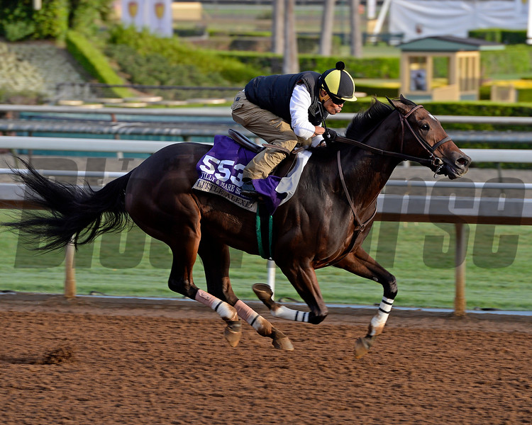 Little Alexis on Oct. 26, 2014, at Santa Anita in preparation for the Breeders' Cup.<br /> 2Origs10_26_14 image410<br /> Anne M. Eberhardt photo