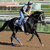 Caption:  IMperia<br /> Scenes at Santa Anita in preparation for Breeders' Cup  in California on Oct. 27, 2014.<br /> 1Origs10_27_14 image<br /> Photo by Anne M. Eberhardt