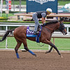 Klimt<br /> Works at Santa Anita in preparation for 2016 Breeders' Cup on Oct. 30, 2016, in Arcadia, CA.