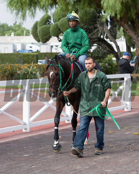 Three Rules<br /> Works at Santa Anita in preparation for 2016 Breeders' Cup on Nov. 1, 2016, in Arcadia, CA.