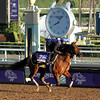 Yellow Agate Breeders' Cup Juvenile Fillies Chad B. Harmon