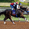 Caption:  Private Zone<br /> Scenes at Santa Anita in preparation for Breeders' Cup  in California on Oct. 27, 2014.<br /> 1Origs10_27_14 image731<br /> Photo by Anne M. Eberhardt