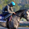 Caption:  Holy Lute<br /> Breeders' Cup horses and connections at Santa Anita near Acadia, California, preparing for Breeders' Cup raceways on Nov. 1 and Nov. 2, 2013.<br /> BCWorks02Jpegs_10_27_13 image864<br /> Photo by Anne M. Eberhardt