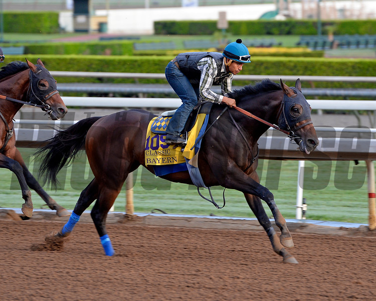 Bayern works for the Breeders' Cup 10/26/2014. <br /> Photo by Anne M. Eberhardt