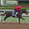 Not this Time, Juvenile<br /> Works at Santa Anita in preparation for 2016 Breeders' Cup on Oct. 29 2016, in Arcadia, CA.