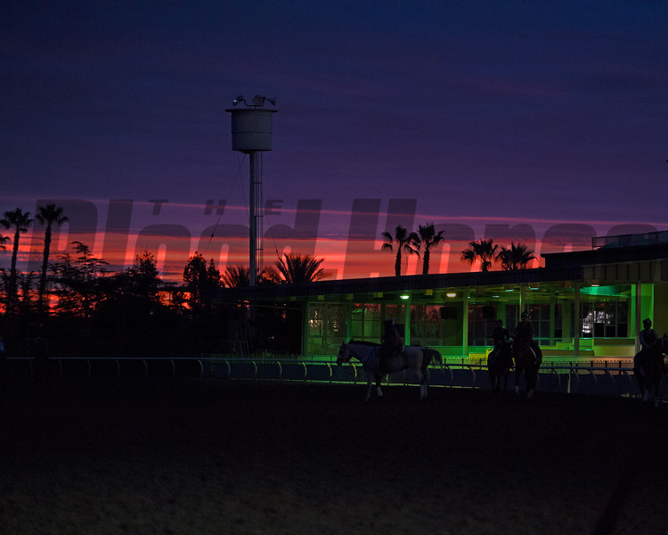Sunrise <br /> Works at Santa Anita in preparation for 2016 Breeders' Cup on Oct. 30, 2016, in Arcadia, CA.