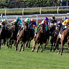 The field rounding the final turn in the Breeders' cup Juvenile Fillies Turf at Santa Anita on 11/4/16
