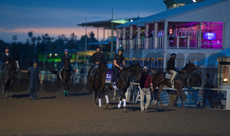 Carina Mia comes off track in front of Trackside Breakfast Marquee<br /> Works at Santa Anita in preparation for 2016 Breeders' Cup on Nov. 1, 2016, in Arcadia, CA.