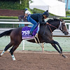 Union Strike, Juvenile Fillies<br /> Works at Santa Anita in preparation for 2016 Breeders' Cup on Oct. 29 2016, in Arcadia, CA.