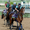 Caption:  Karakontie, followed by Flintshire and Veda<br /> Scenes at Santa Anita in preparation for Breeders' Cup  in California on Oct. 27, 2014.<br /> 2Origs10_27_14 image020<br /> Photo by Anne M. Eberhardt