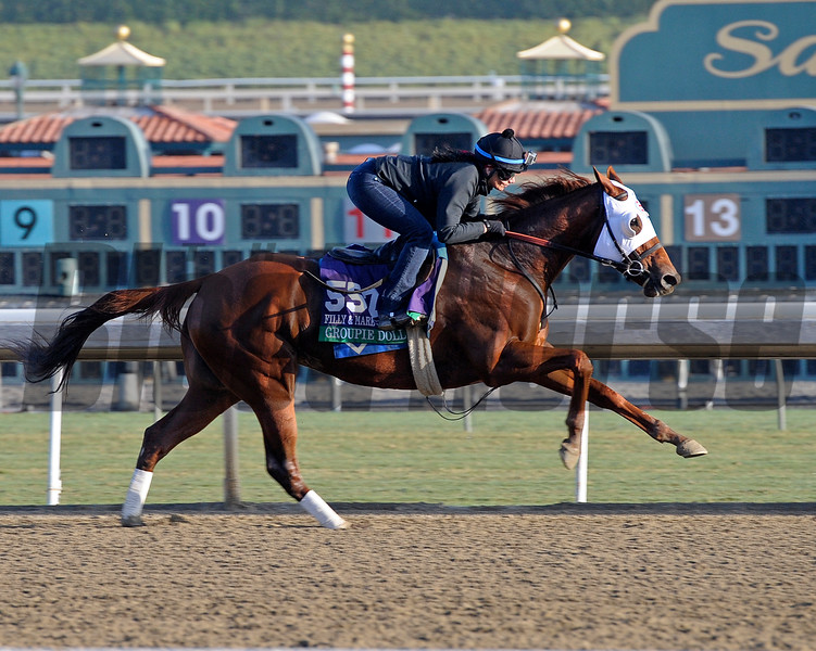 Caption:  Groupie Doll<br /> Breeders' Cup horses and connections at Santa Anita near Acadia, California, preparing for Breeders' Cup raceways on Nov. 1 and Nov. 2, 2013.<br /> BCWorks01_10_26_13 Jpgsimage686<br /> Photo by Anne M. Eberhardt