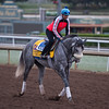 Win the Space<br /> Works at Santa Anita in preparation for 2016 Breeders' Cup on Oct. 29 2016, in Arcadia, CA.