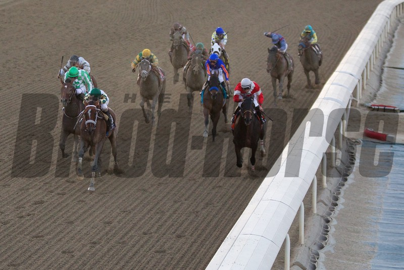 Mucho Macho Man (green cap, second from left), with Gary Stevens up, led the field down the stretch to win the Breeders' Cup Classic (G. I). Photo by Crawford Ifland.