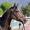Sistercharlie<br /> Oct. 29, 2019 Santa Anita in Arcadia, CA. <br /> Anne M. Eberhardt Photo