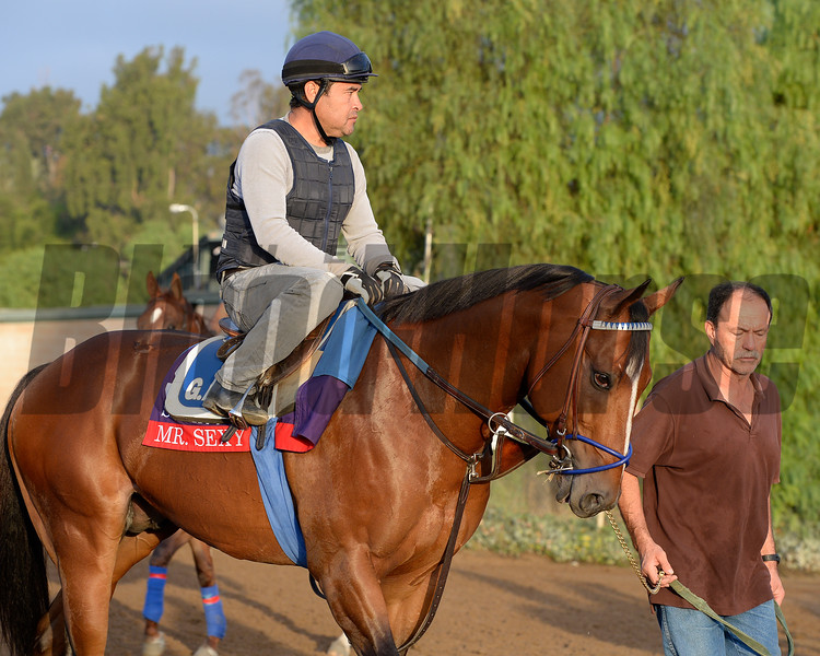 Caption:  Mr.Sexy<br /> Scenes at Santa Anita in preparation for Breeders' Cup  in California on Oct. 27, 2014.<br /> 1Origs10_27_14 image<br /> Photo by Anne M. Eberhardt