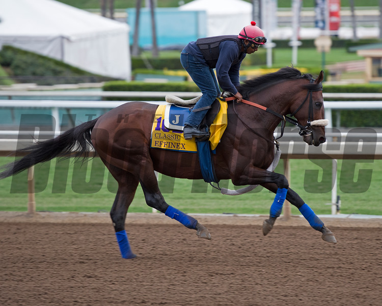 Effinex<br /> Works at Santa Anita in preparation for 2016 Breeders' Cup on Oct. 30, 2016, in Arcadia, CA.