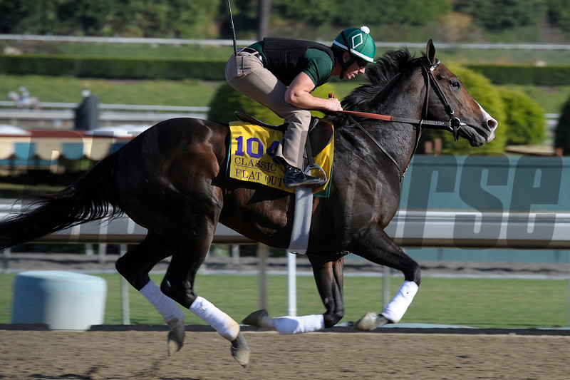 Caption:  Flat Out<br /> Breeders' Cup horses and connections at Santa Anita near Acadia, California, preparing for Breeders' Cup raceways on Nov. 1 and Nov. 2, 2013.<br /> BCWorks1Jpegs_10_29_13 628Photo by Anne M. Eberhardt