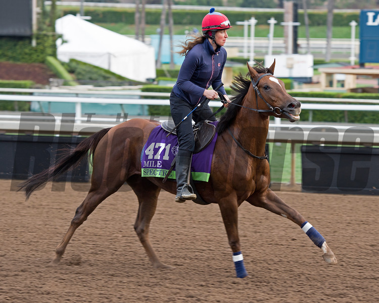 Spectre<br /> Works at Santa Anita in preparation for 2016 Breeders' Cup on Nov. 1, 2016, in Arcadia, CA.