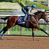 American Pharoah with Martin Garcia works for Bob Baffert on Oct. 26, 2014, at Santa Anita in preparation for the Breeders' Cup.<br /> Anne M. Eberhardt photo