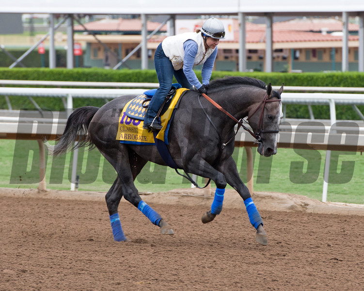 Arrogate<br /> Works at Santa Anita in preparation for 2016 Breeders' Cup on Oct. 30, 2016, in Arcadia, CA.