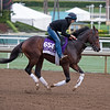 Texas Chrome<br /> Works at Santa Anita in preparation for 2016 Breeders' Cup on Oct. 31, 2016, in Arcadia, CA.