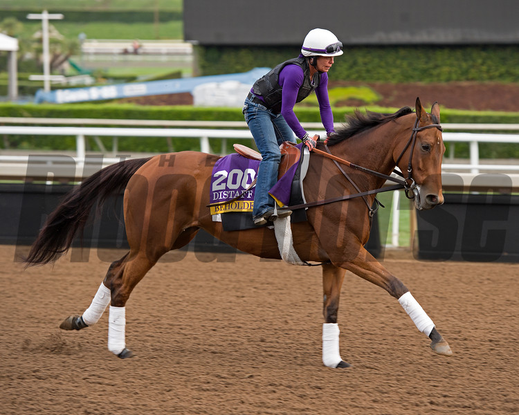Beholder<br /> Works at Santa Anita in preparation for 2016 Breeders' Cup on Nov. 1, 2016, in Arcadia, CA.