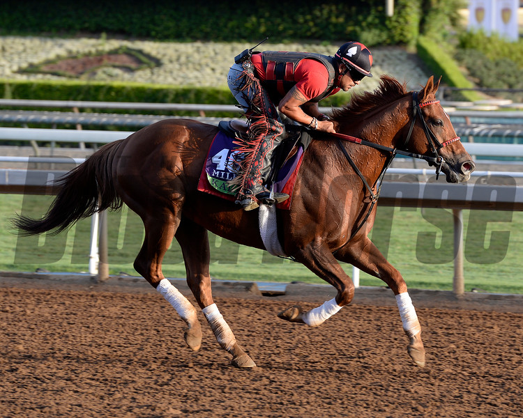 Caption:  Kaigun<br /> Scenes at Santa Anita in preparation for Breeders' Cup  in California on Oct. 27, 2014.<br /> 1Origs10_27_14 image783<br /> Photo by Anne M. Eberhardt