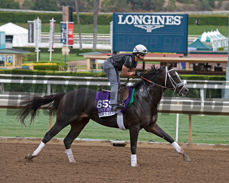 Tom's Ready, Dirt Mile.<br /> Works at Santa Anita in preparation for 2016 Breeders' Cup on Oct. 29 2016, in Arcadia, CA.