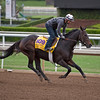 Melatonin<br /> Works at Santa Anita in preparation for 2016 Breeders' Cup on Oct. 30, 2016, in Arcadia, CA.