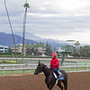 Not This Time<br /> Works at Santa Anita in preparation for 2016 Breeders' Cup on Oct. 29 2016, in Arcadia, CA.