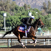 Sea Calisi Breeders' Cup Filly & Mare Turf Chad B. Harmon