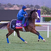 Queen's Trust<br /> Works at Santa Anita in preparation for 2016 Breeders' Cup on Nov. 1, 2016, in Arcadia, CA.