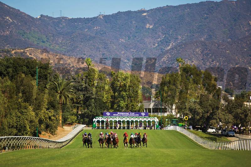 The horses ran down the hill in the 2013 GEICO Breeders' Cup Turf Sprint (G. I). Photo by Crawford Ifland.