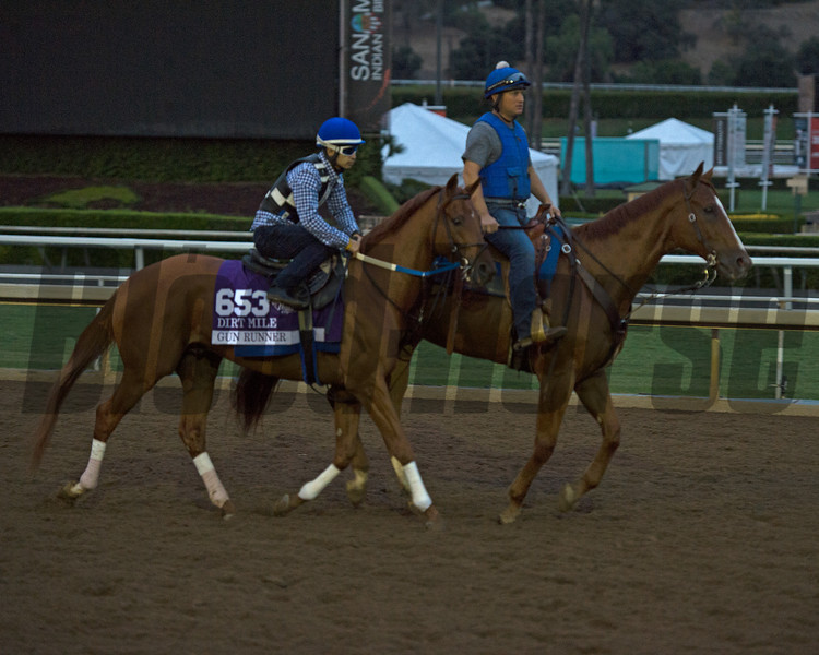 Gun Runner<br /> Works at Santa Anita in preparation for 2016 Breeders' Cup on Oct. 30, 2016, in Arcadia, CA.